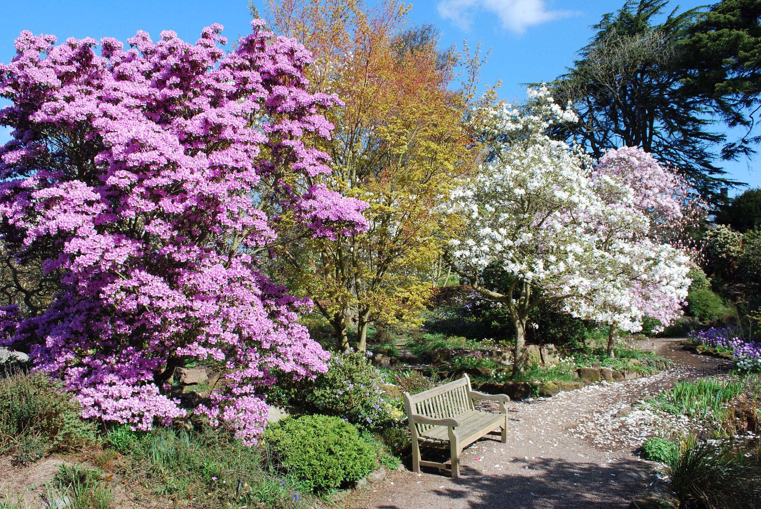 Birmingham Botanical Gardens 4