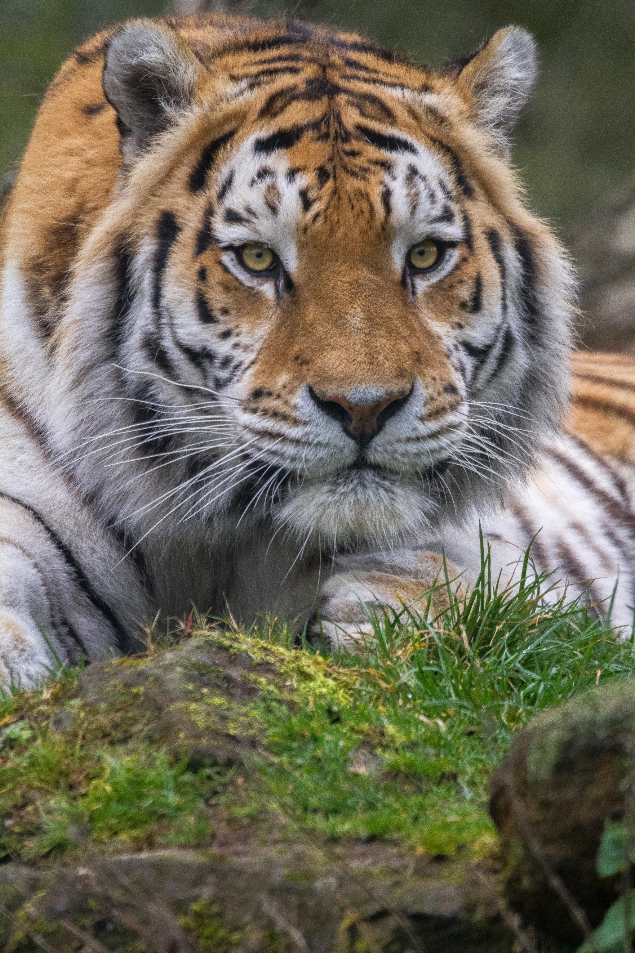 Banham Zoo 11