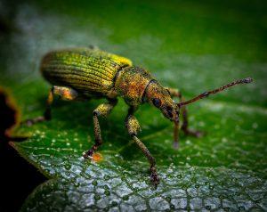 Family Learning – Beast Bug Hunt 3
