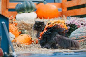 Halloween Spectacular