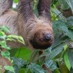 Banham Zoo 104