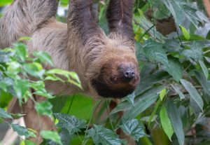 Banham Zoo 3