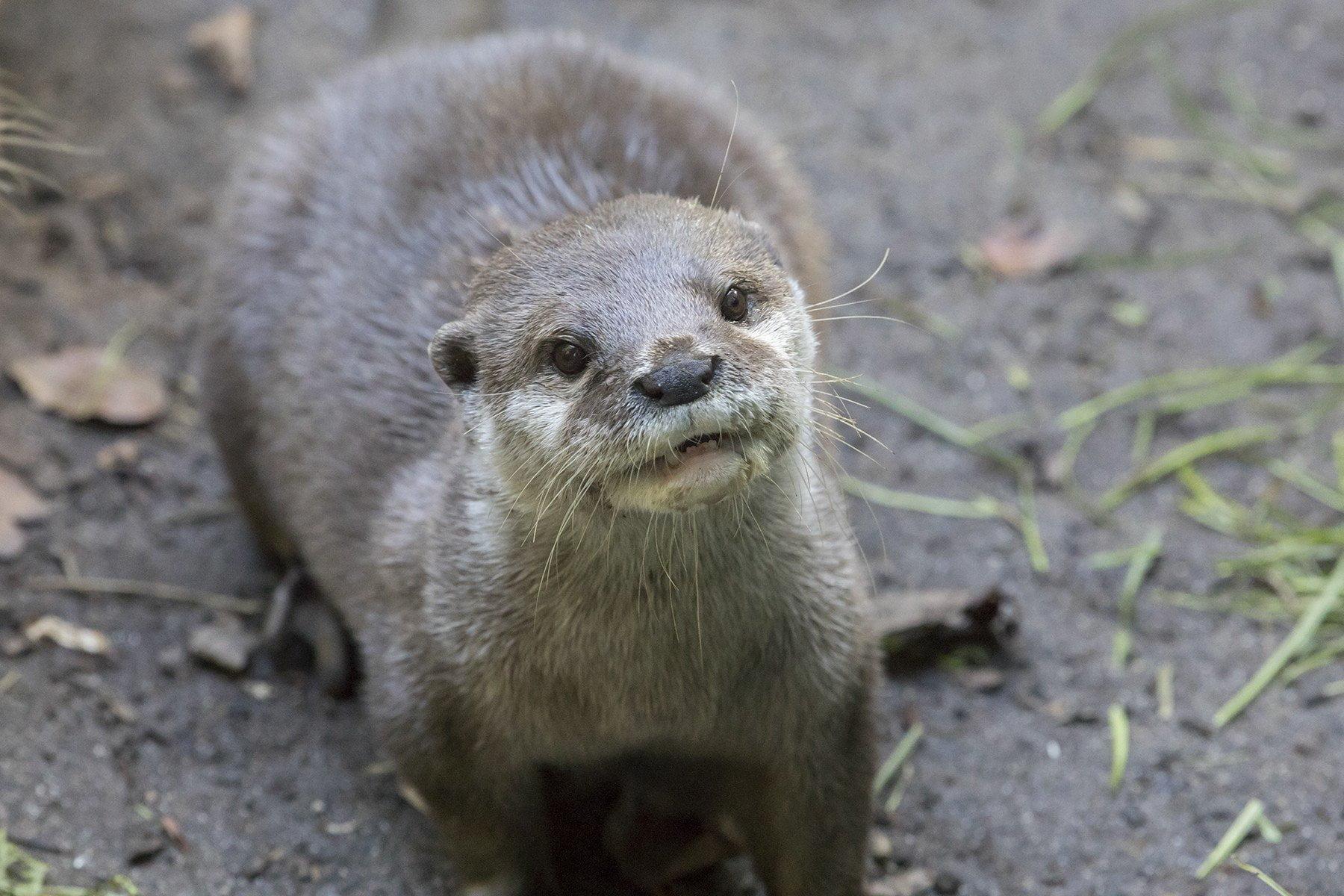 The Cornish Seal Sanctuary, Gweek 7