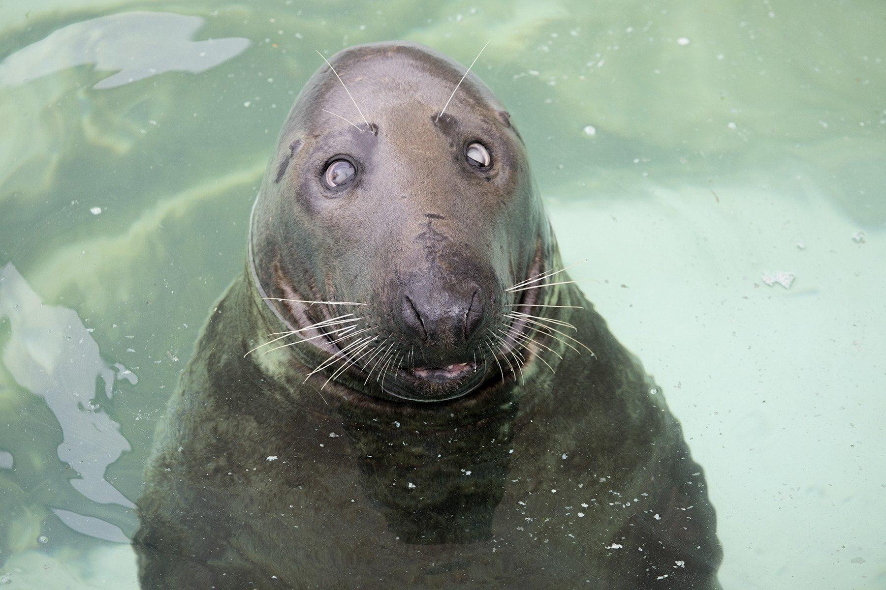 The Cornish Seal Sanctuary, Gweek 11