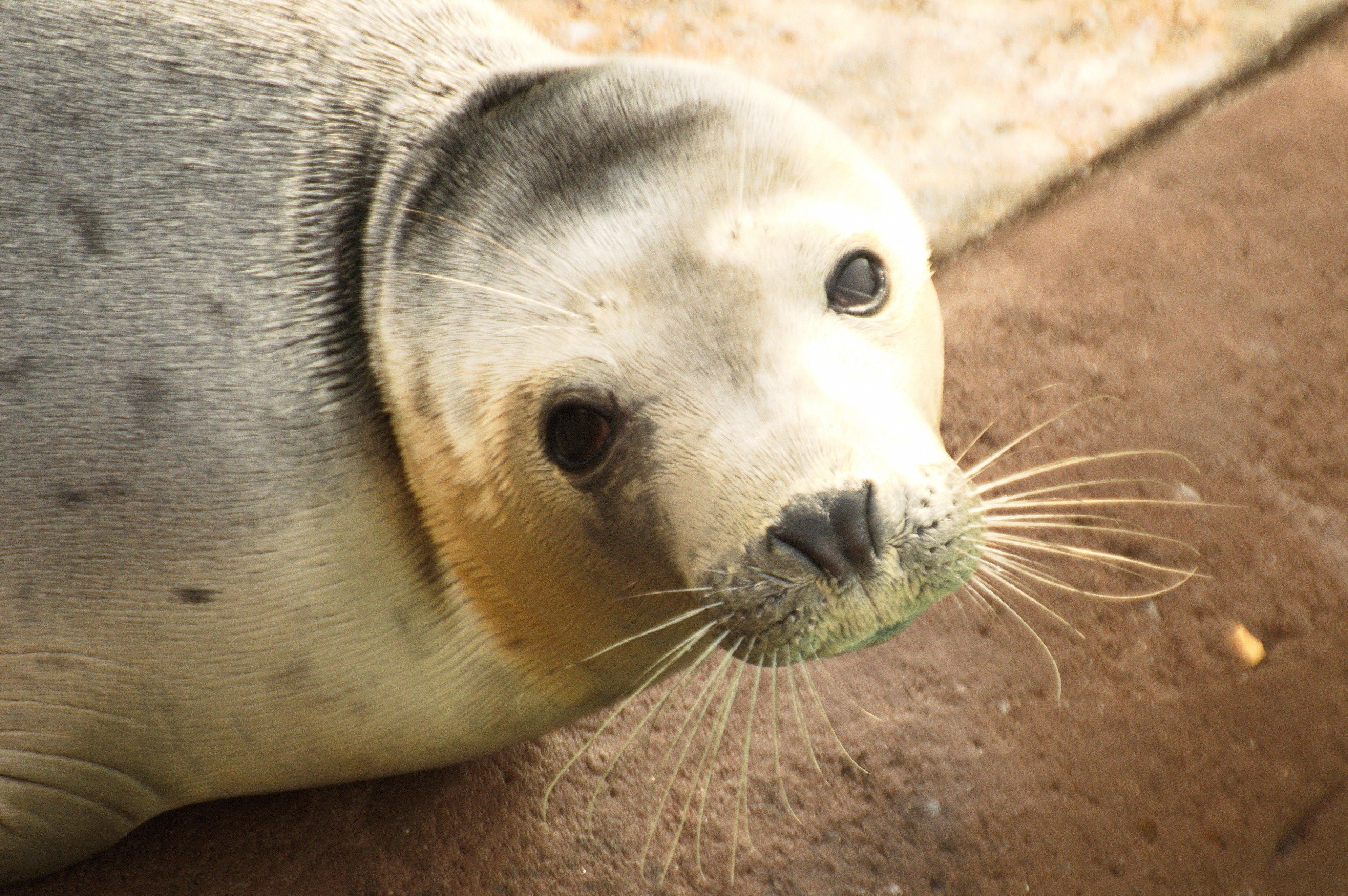 The Cornish Seal Sanctuary, Gweek 9