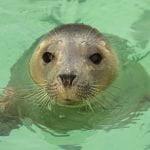 The Cornish Seal Sanctuary 34