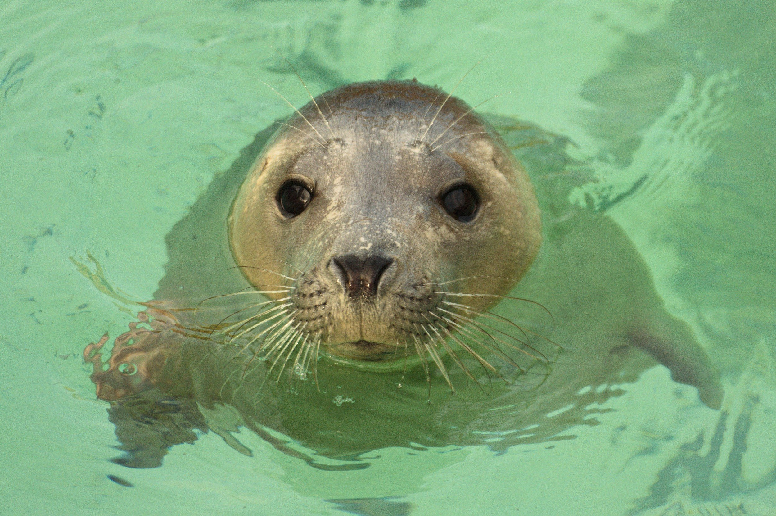 The Cornish Seal Sanctuary 10