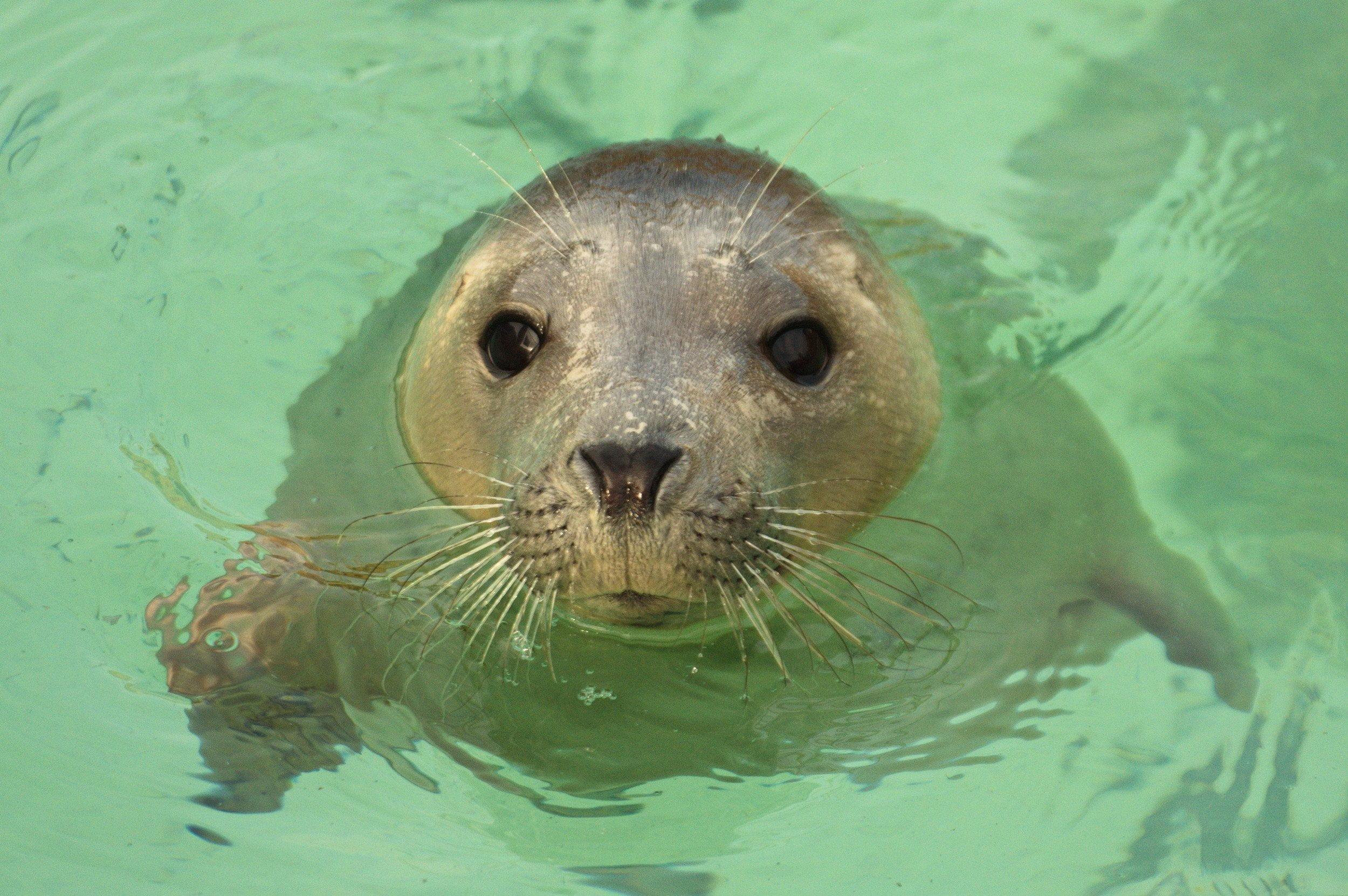 The Cornish Seal Sanctuary, Gweek 10