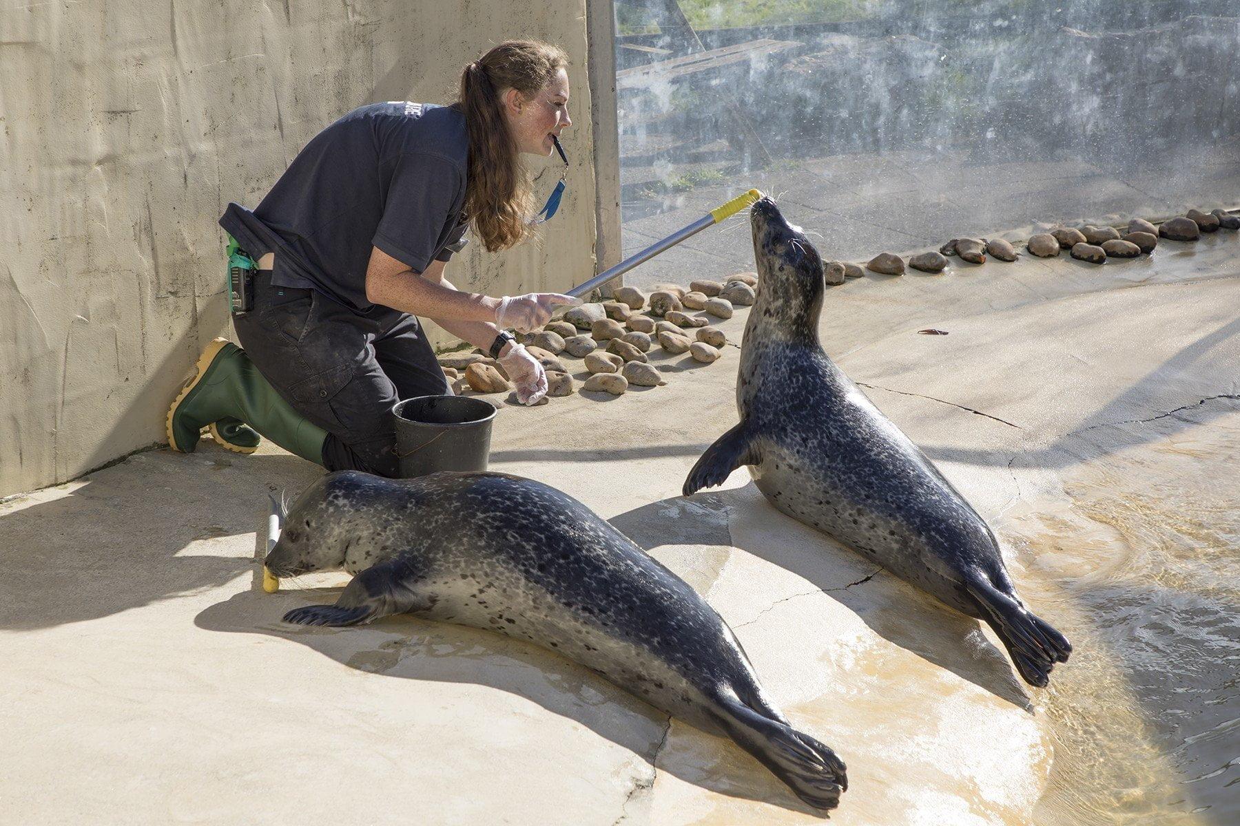 The Cornish Seal Sanctuary, Gweek 5
