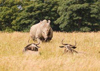 Knowsley Safari 4
