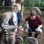 Lakeland Wildlife Oasis 113