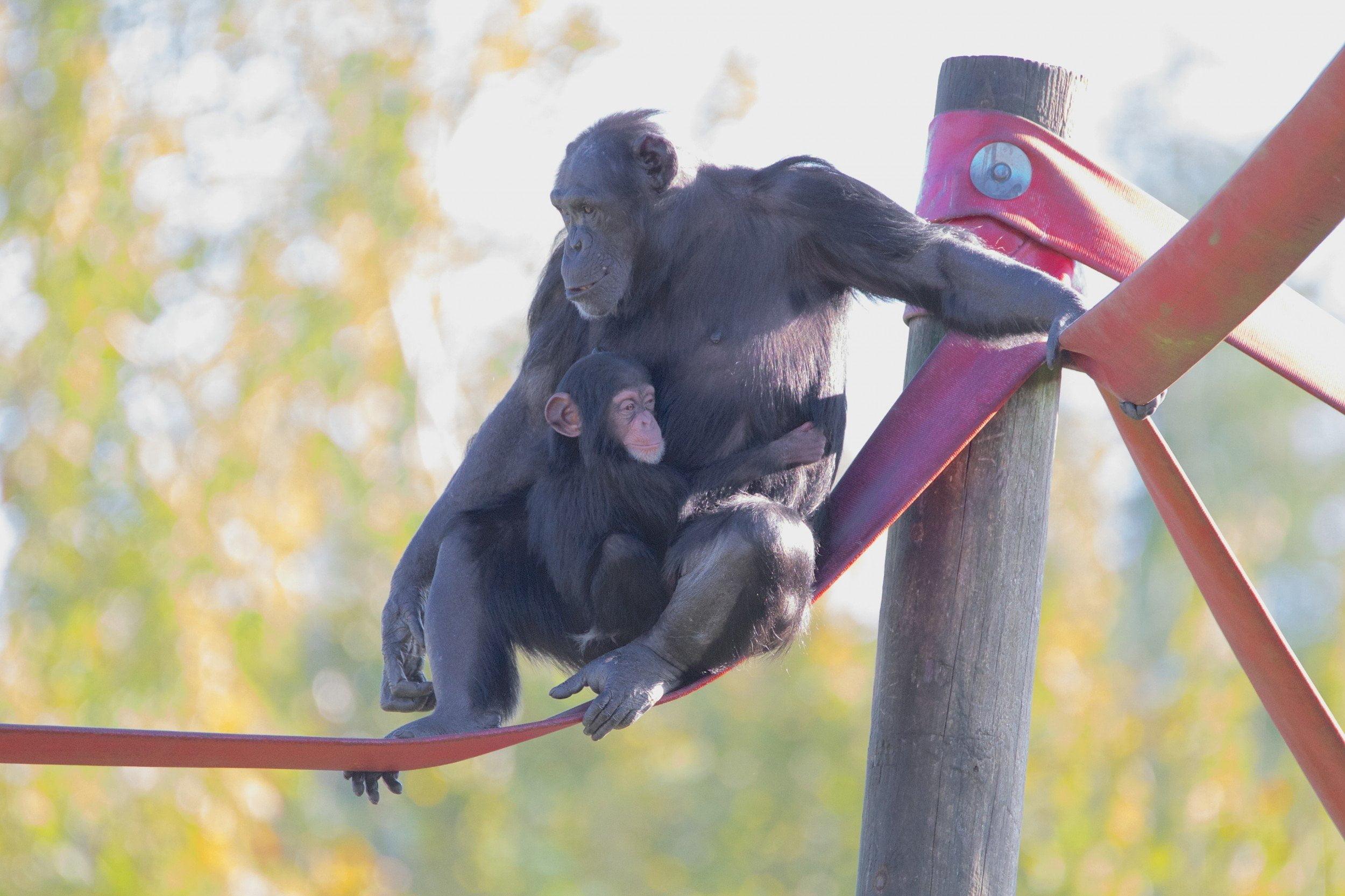 Monkey World - Ape Rescue Centre 8