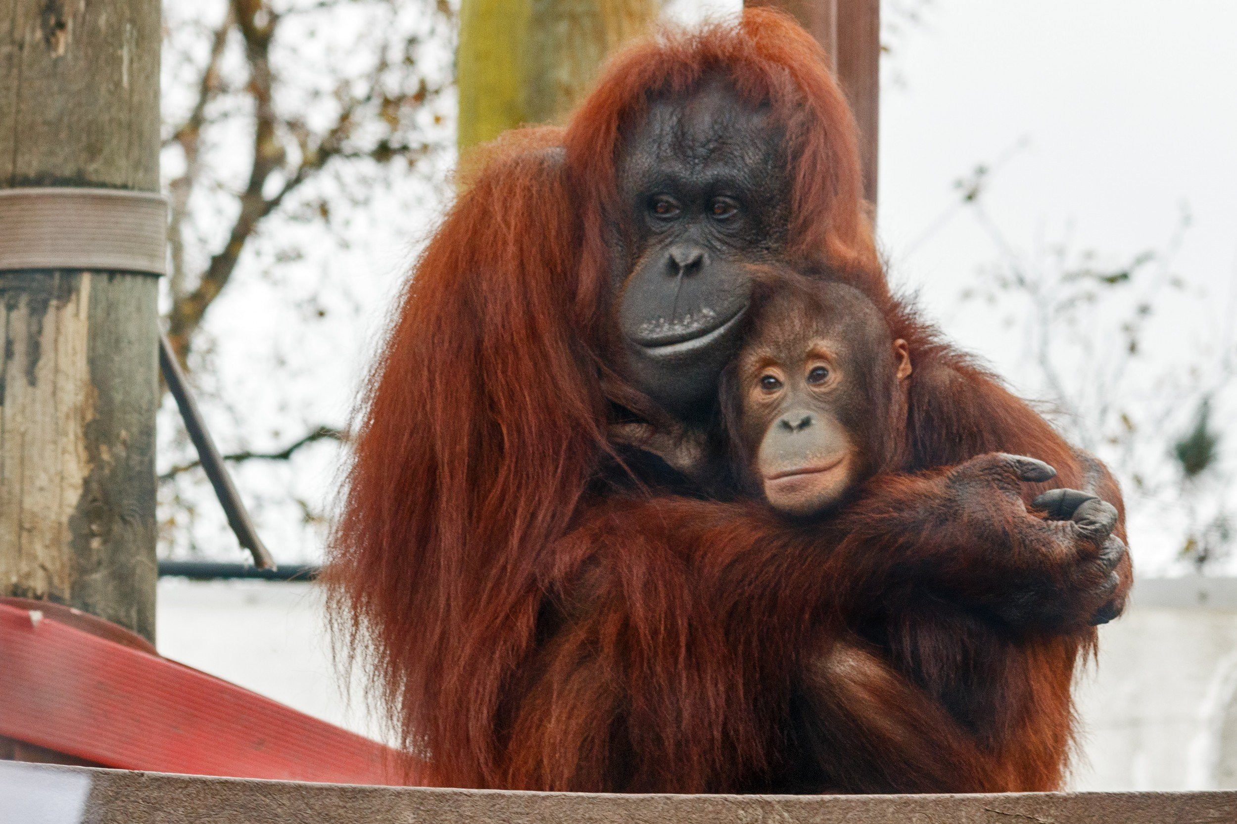 Monkey World - Ape Rescue Centre 9