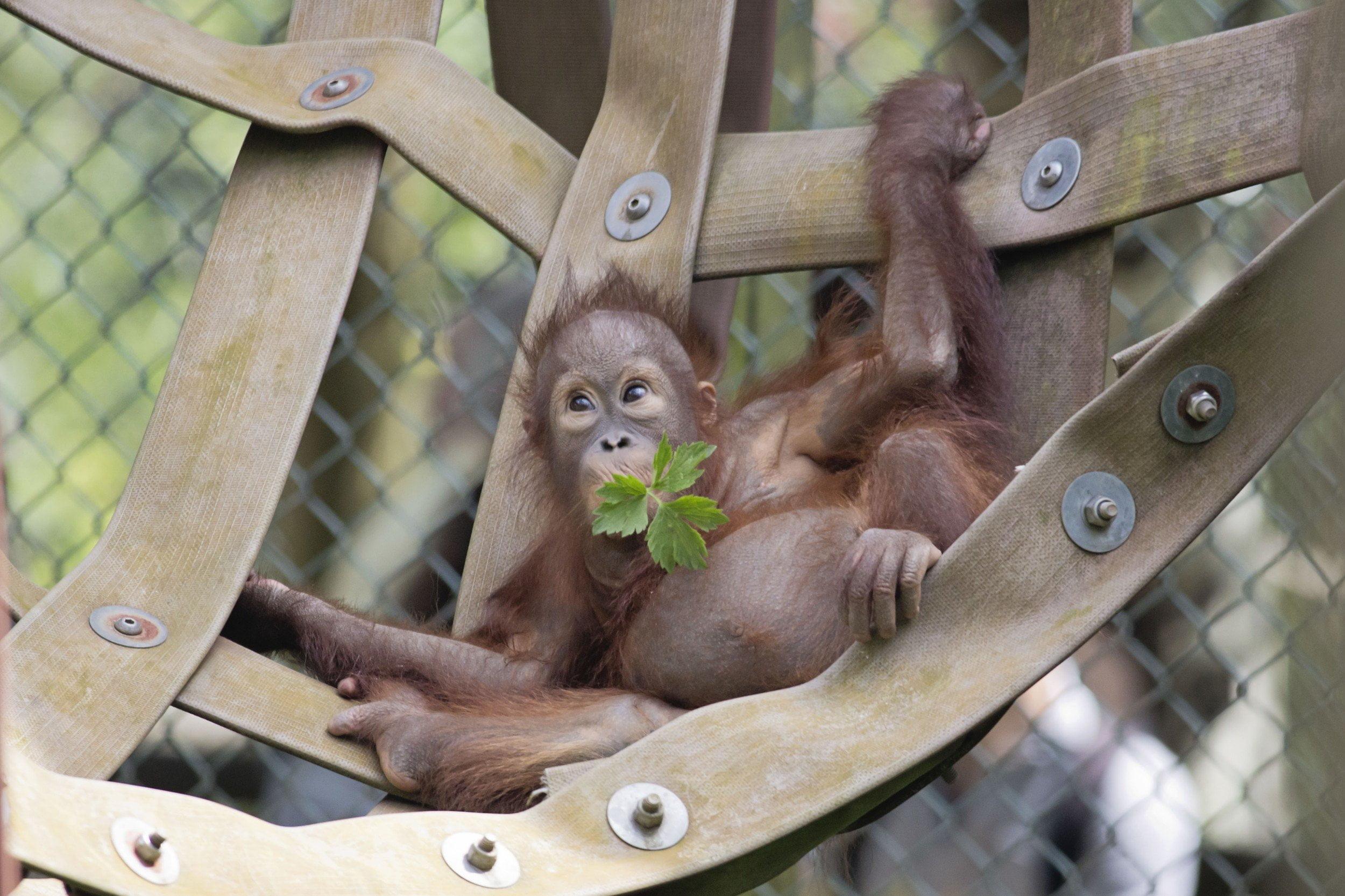 Monkey World - Ape Rescue Centre 14