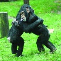 Monkey World - Ape Rescue Centre 19