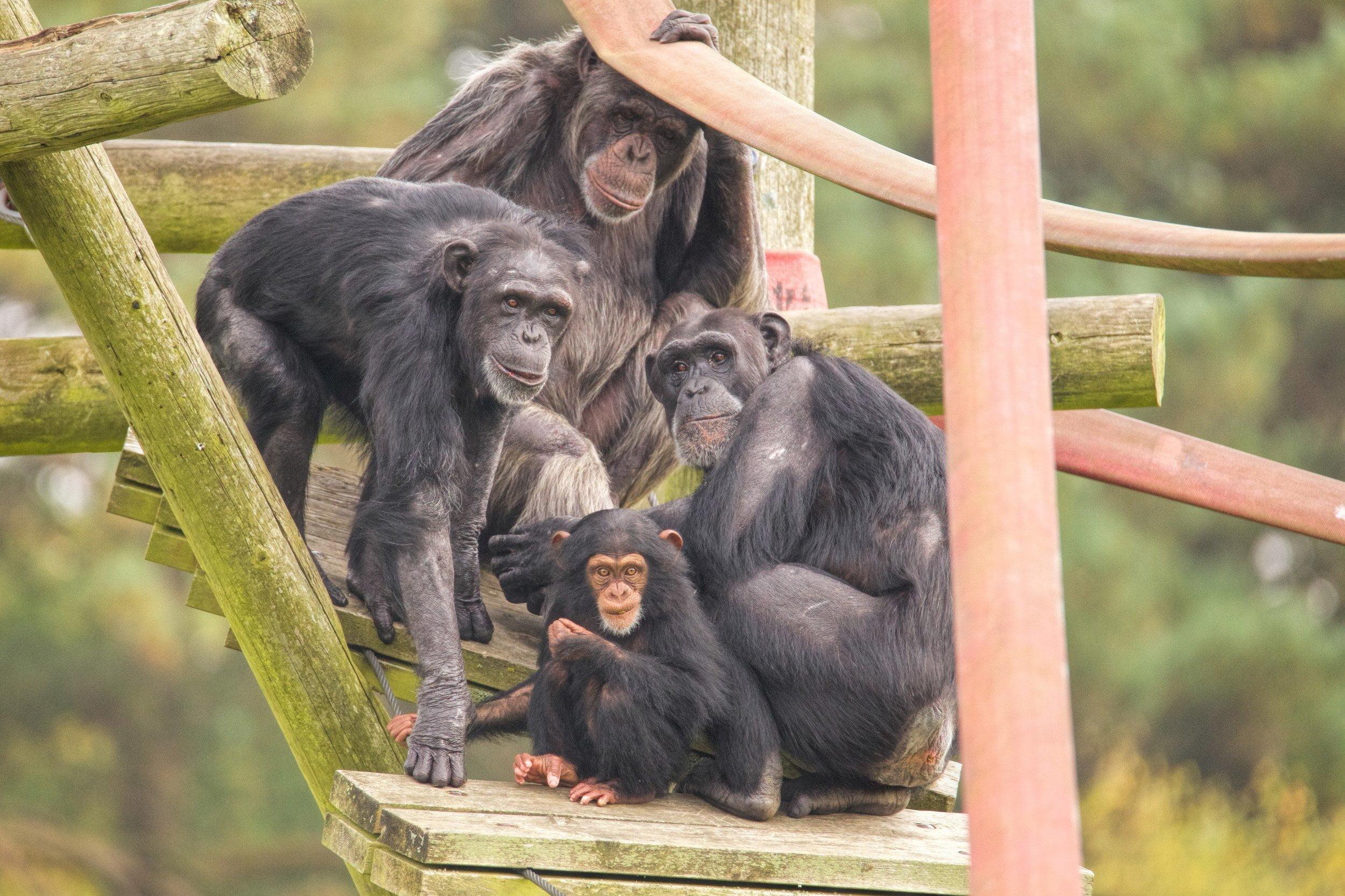 Monkey World - Ape Rescue Centre 17