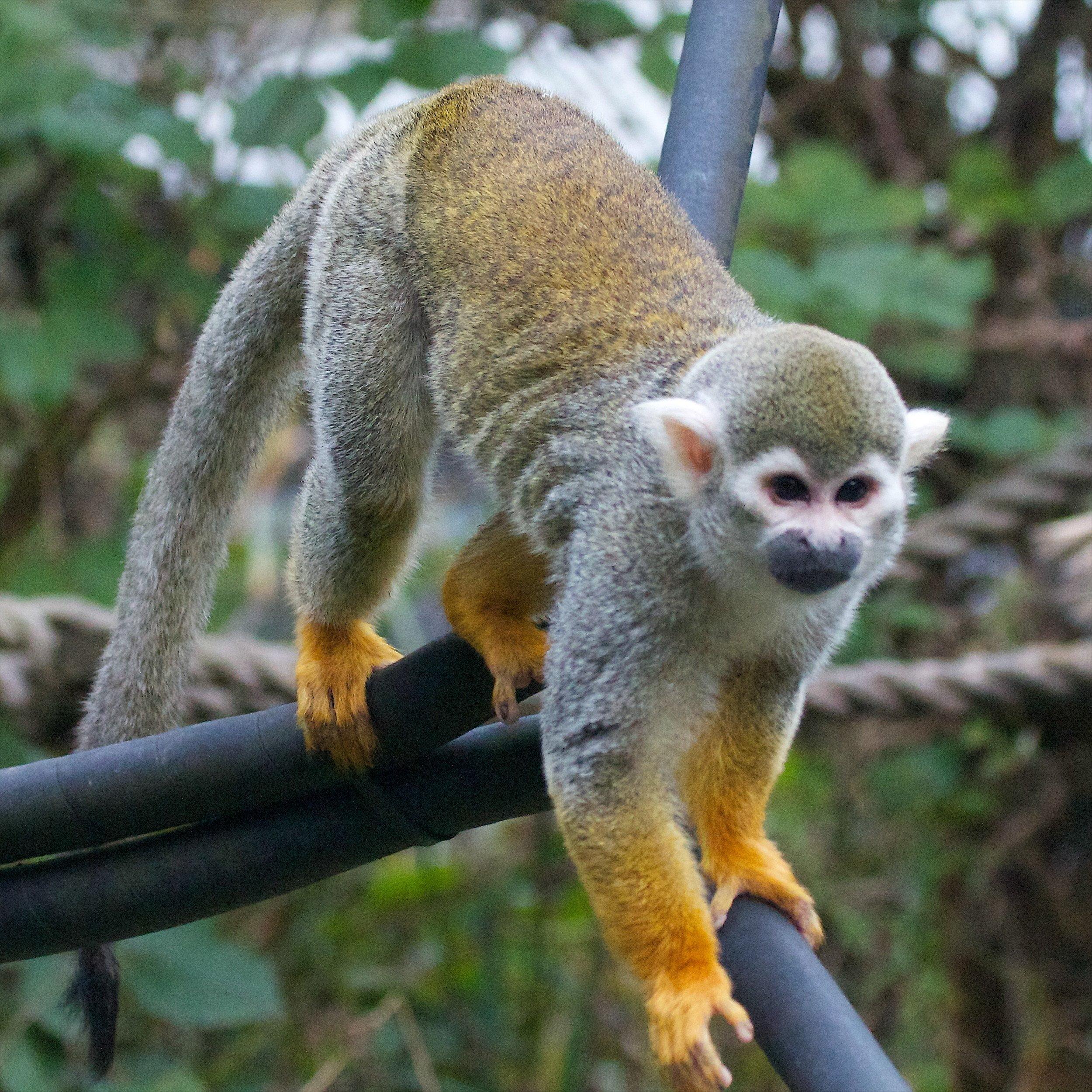 Monkey World - Ape Rescue Centre 15