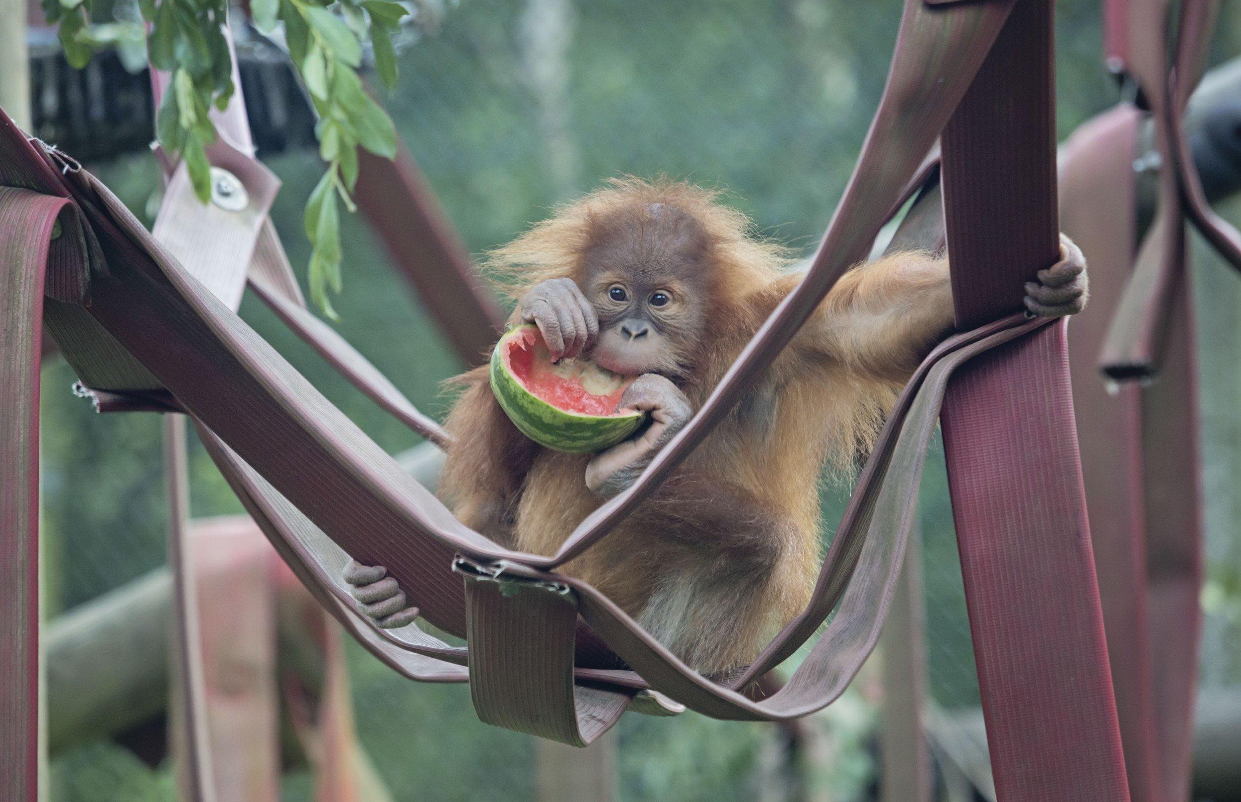 Monkey World - Ape Rescue Centre 5
