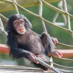 Monkey World - Ape Rescue Centre 7