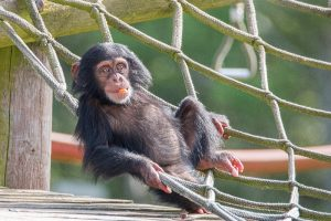 Monkey World - Ape Rescue Centre 2