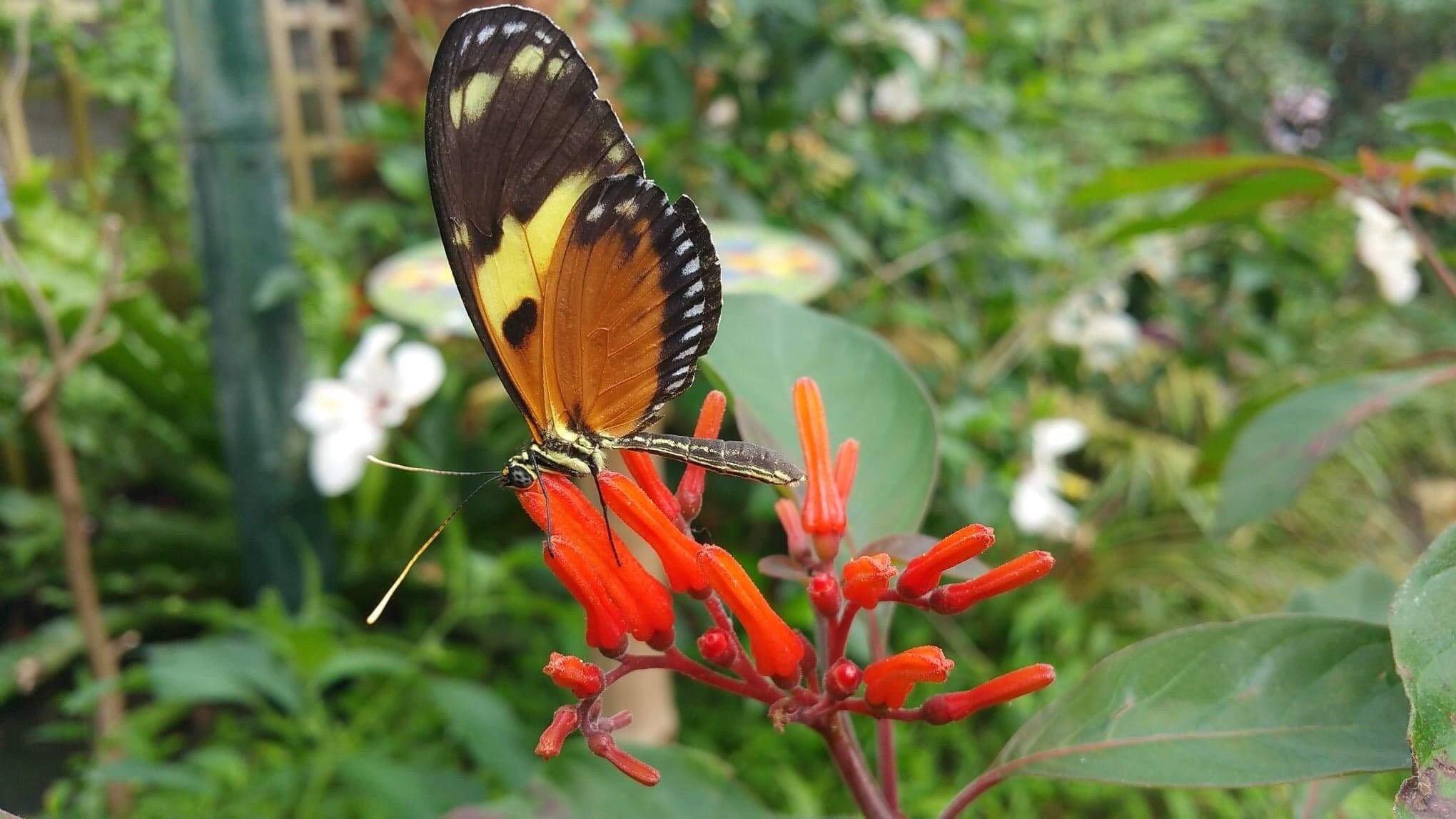 Stratford Butterfly Farm 115