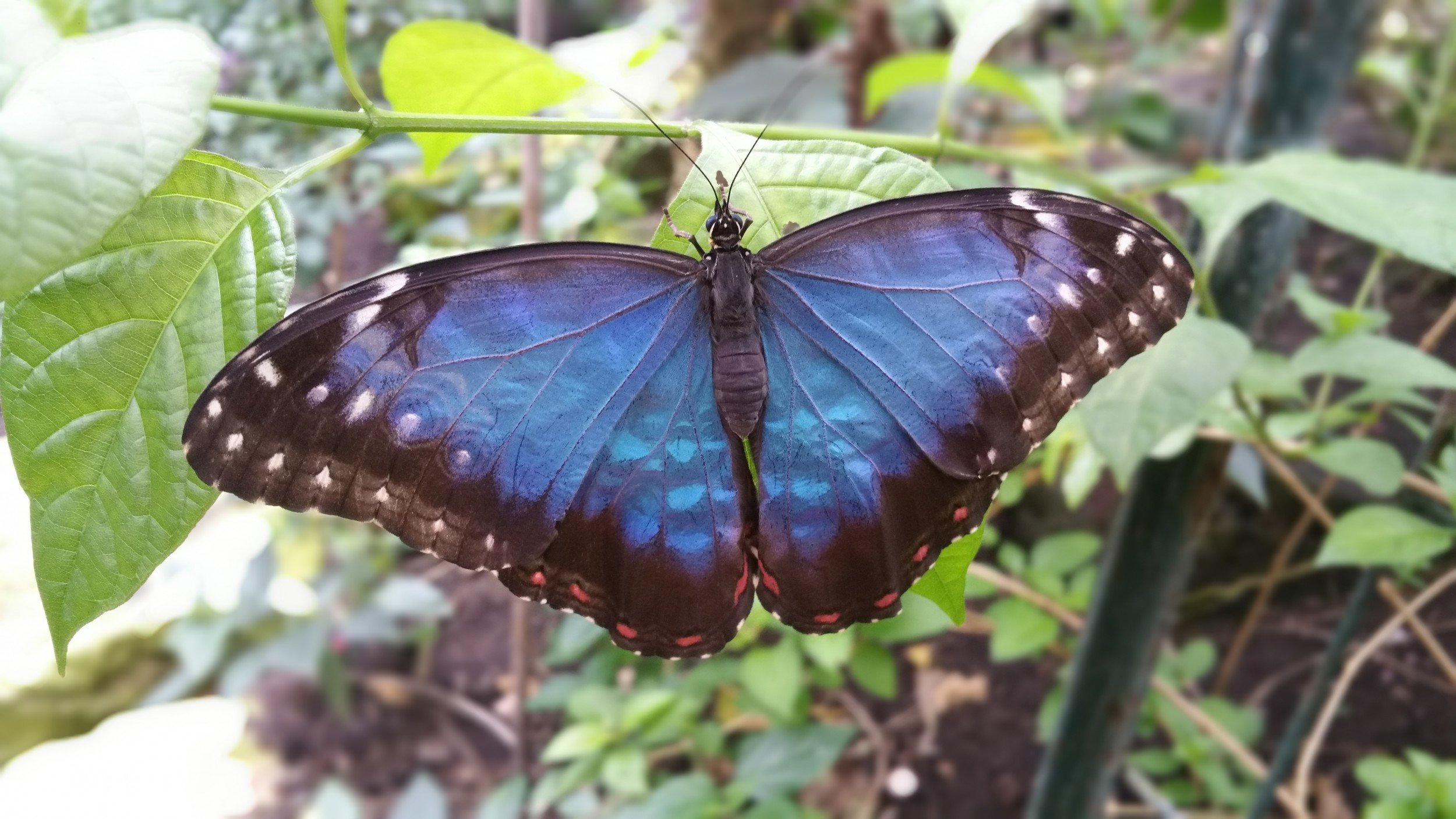 Stratford Butterfly Farm 6