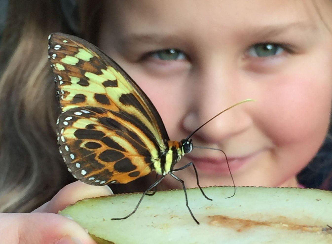 Stratford Butterfly Farm 7